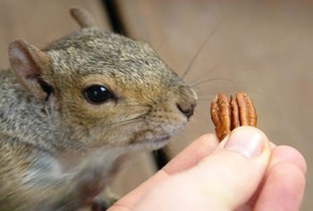 squirrel-feeding